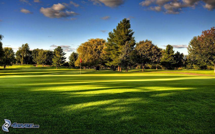 golfbana, träd