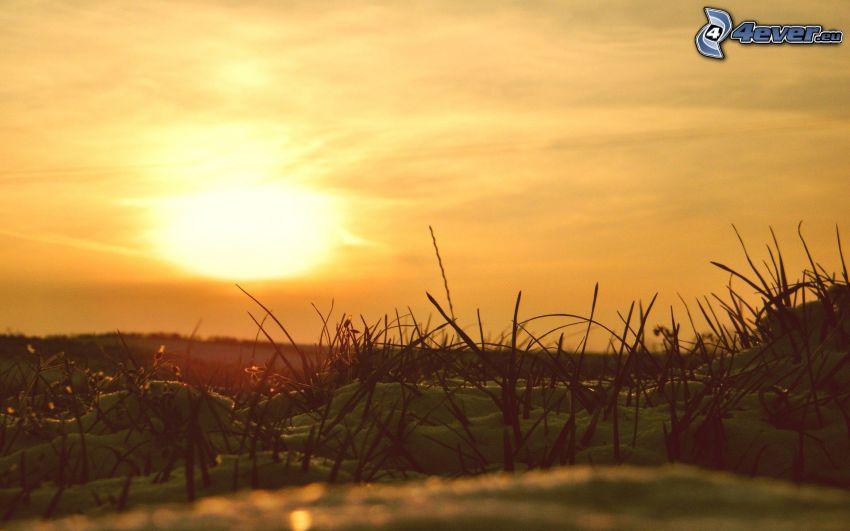 grässtrån vid solnedgång