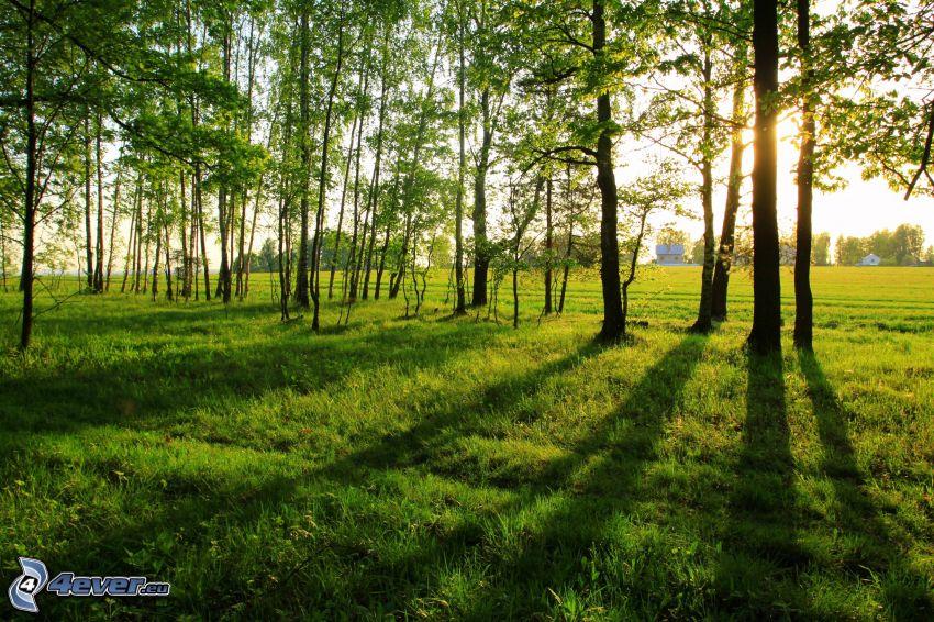 grön äng, träd