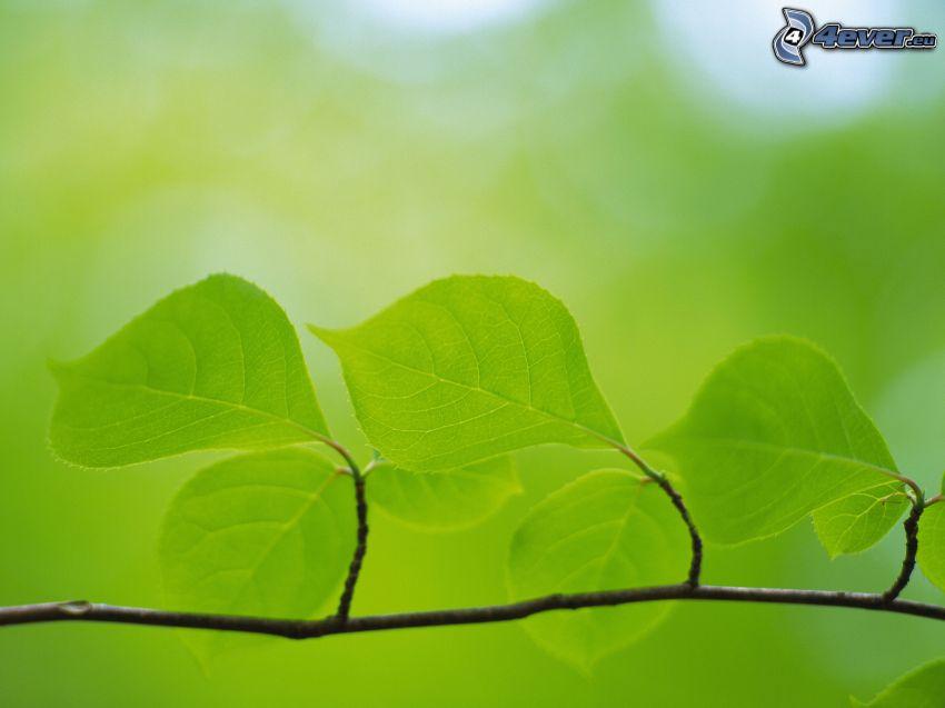 gröna blad på gren