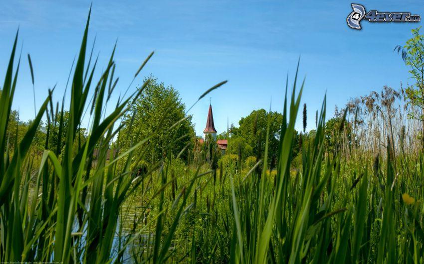 grönska, sjö, slott