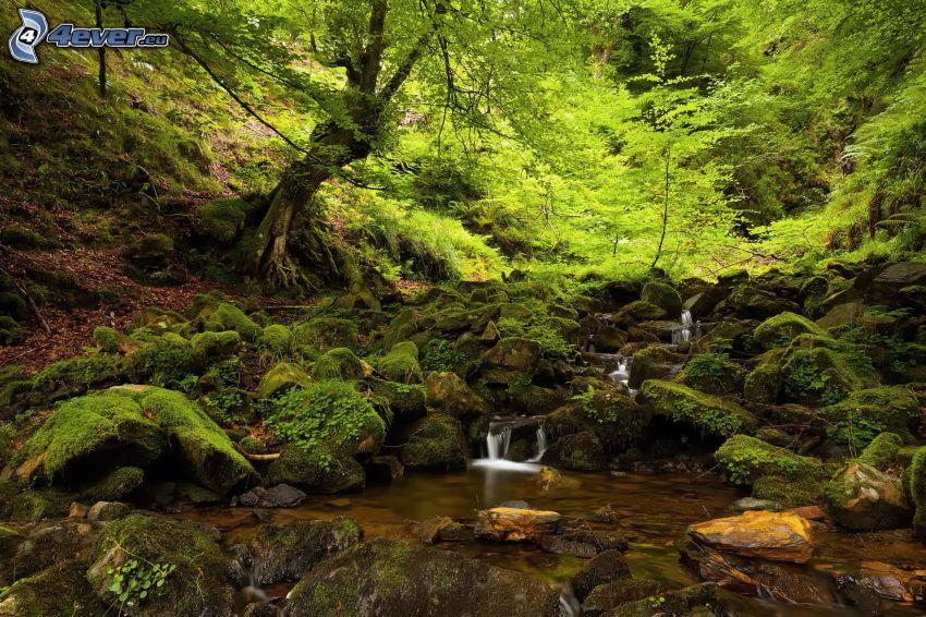 grönska, skogsbäck, vattenfall