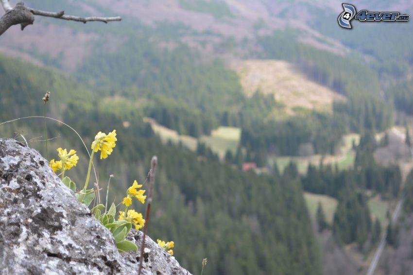 gula blommor, klippa, bergskedja, utsikt