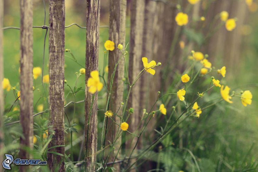 gula blommor, trästaket
