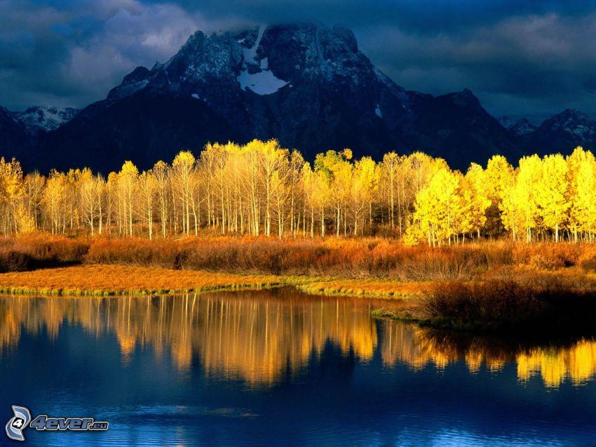 gula träd, klippor, bäck, spegling