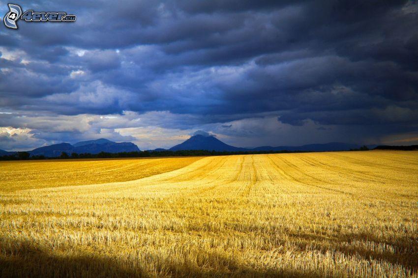 gult fält, mörka moln