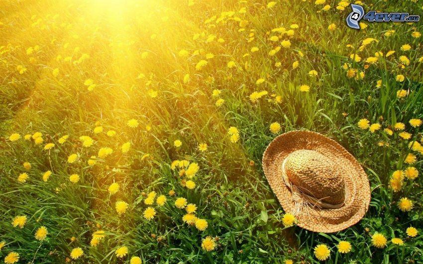 hatt, maskrosor, gräs, solstrålar