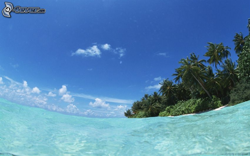 azurblå hav, palmer på strand