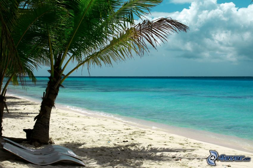 azurblå hav, sandstrand, palm, solstolar