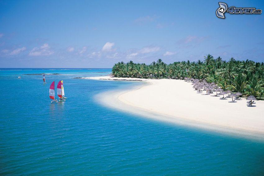 azurblå hav, windsurfing, sandstrand, palmer
