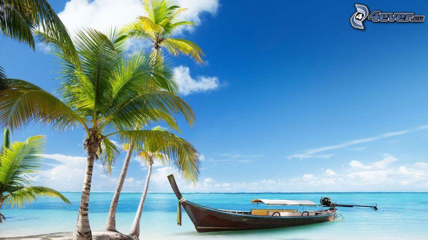 båt vid stranden, palmer, hav