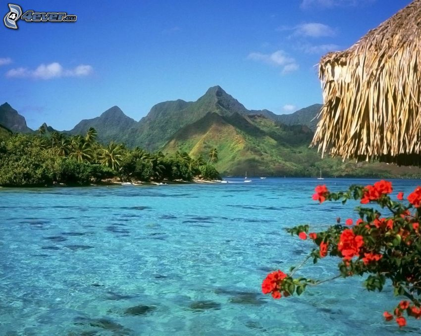 Bora Bora, berg, röda blommor, azurblå hav