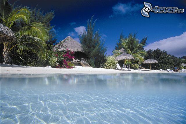 bungalows vid havet på Bora Bora, azurblå hav, palmer på strand
