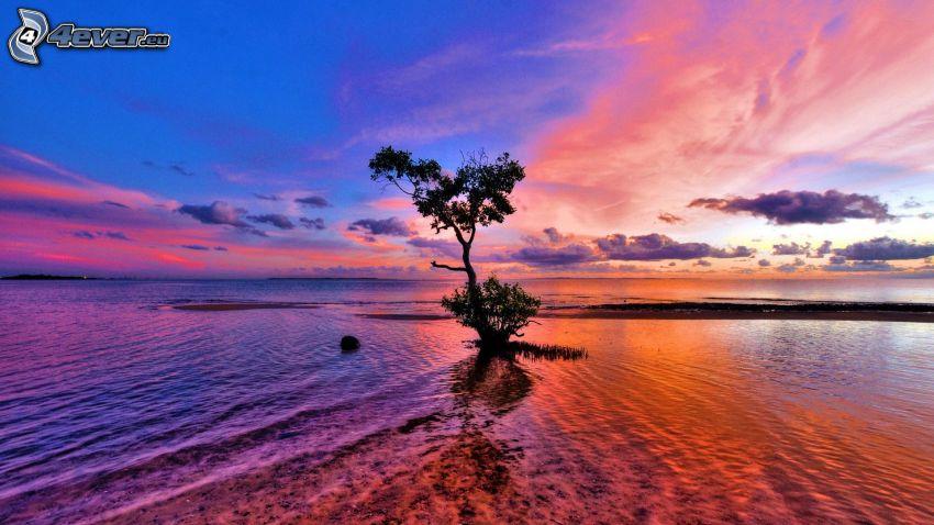 ensamt träd, hav, himmel