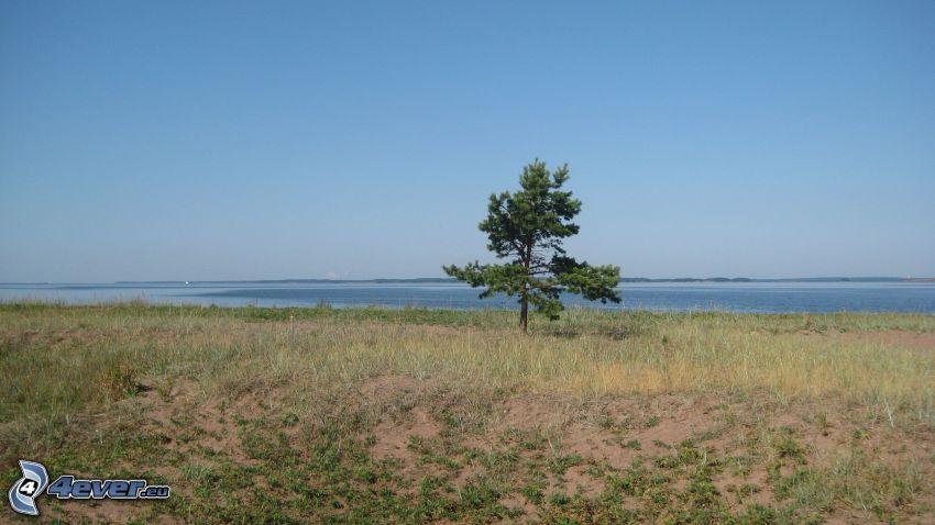 ensamt träd, hav
