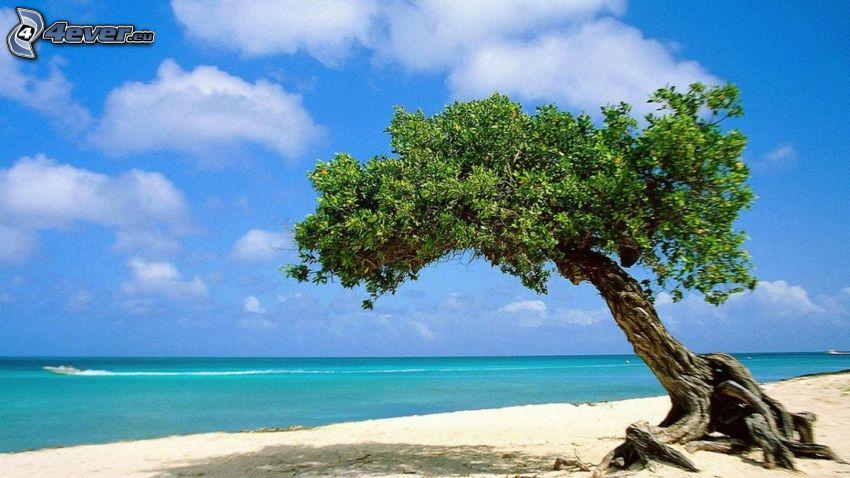 ensamt träd, öppet hav, sandstrand
