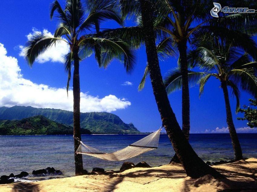 hängmatta, tropisk ö, vila, hav