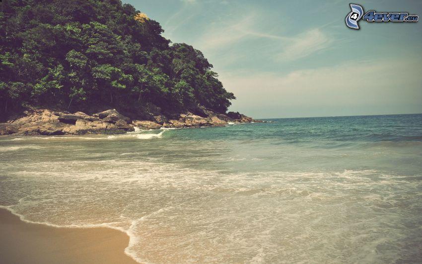 hav, kust, skog