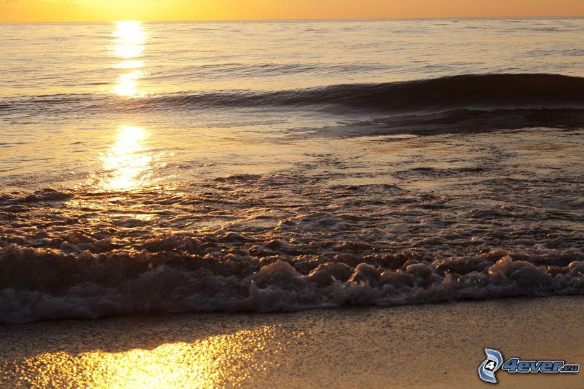hav, reflektion av solen, strand