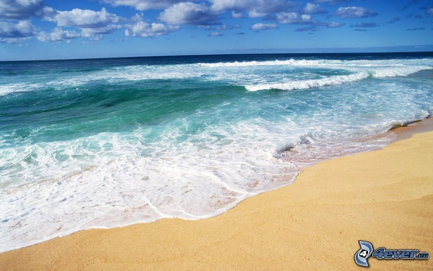 hav, strand