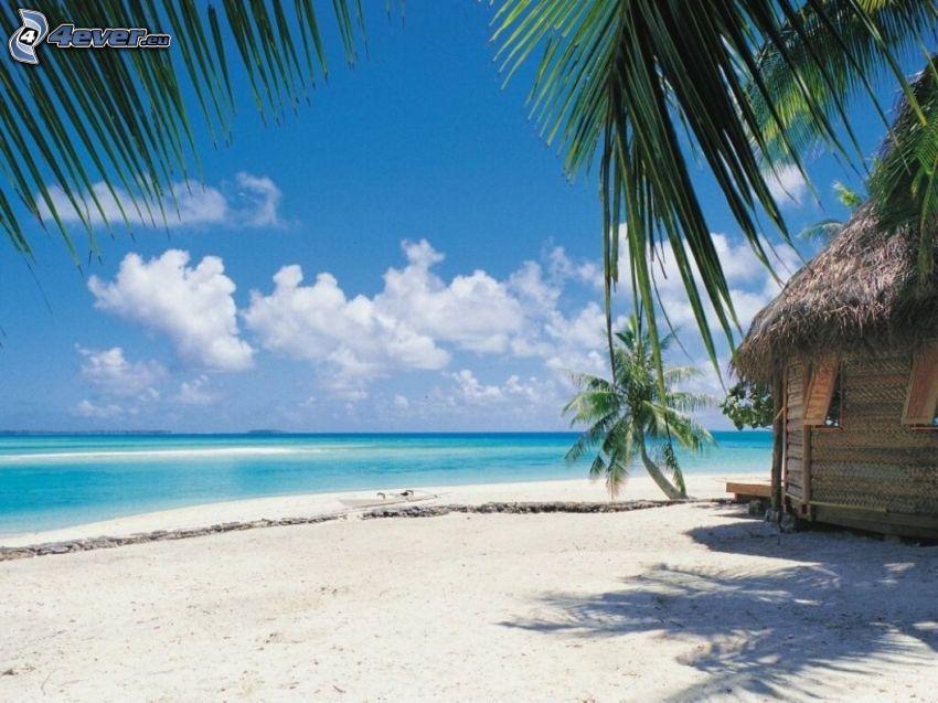 hav, stuga, sandstrand, palmer på strand