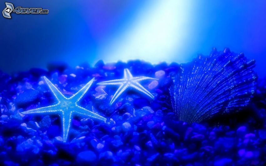 havsbotten, sjöstjärnor, mussla, småsten