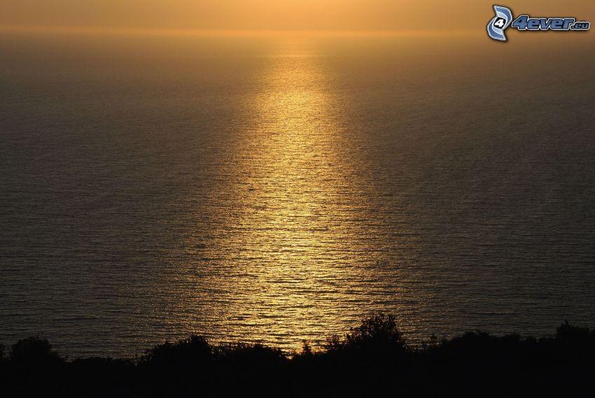 havsutsikt, siluetter av träd, reflektion av solen