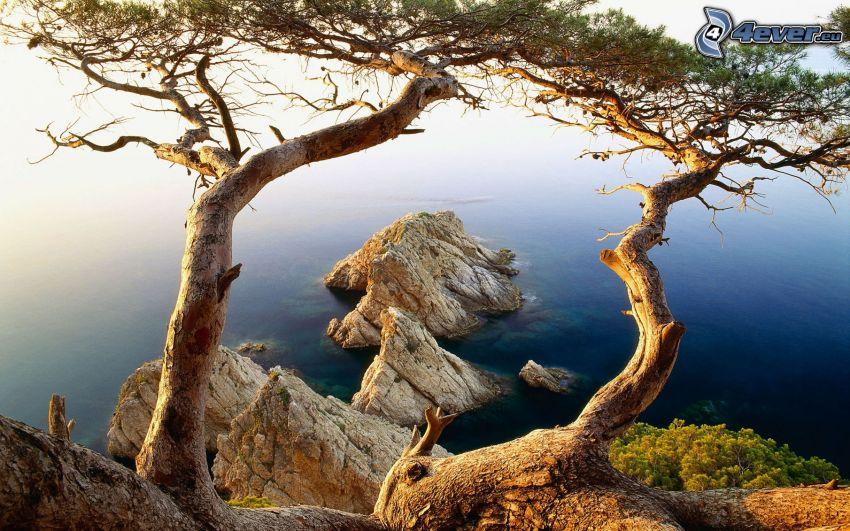 klippor i havet, träd