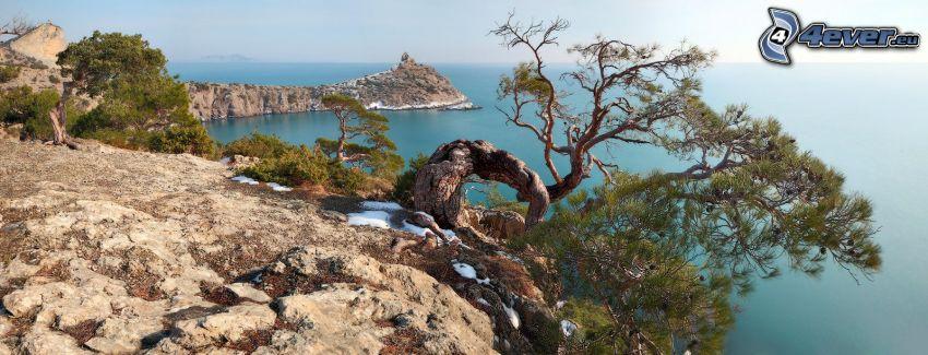 klippstrand, träd, havsutsikt