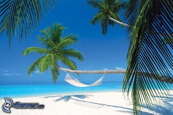 Maldiverna, hängmatta, palmträd över sandstrand, palmer, sandstrand, azurblå sommarhav