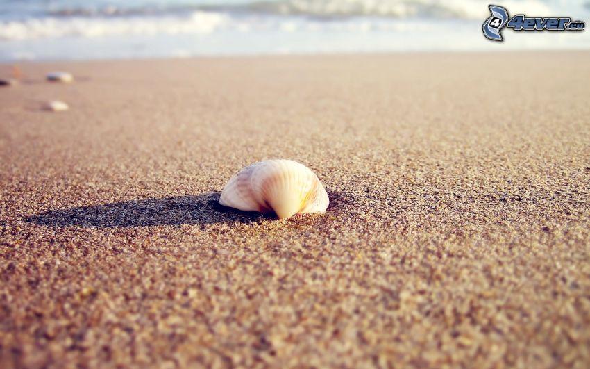 mussla, sandstrand