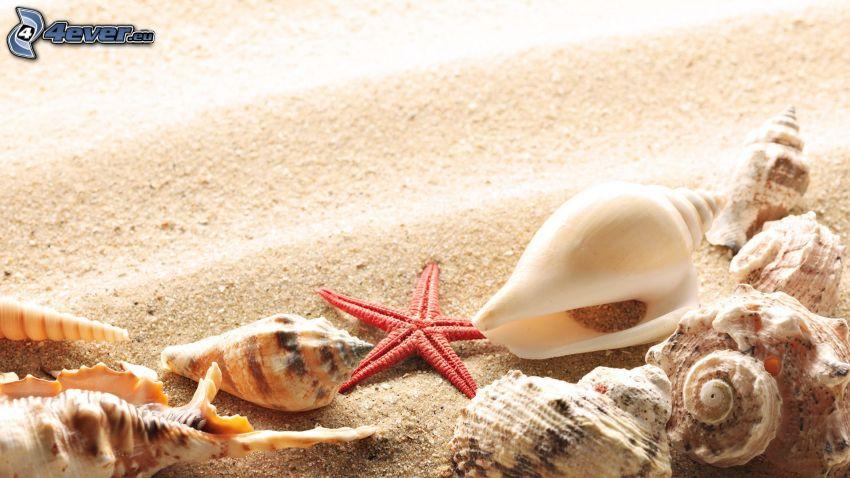 musslor, sand, sjöstjärna