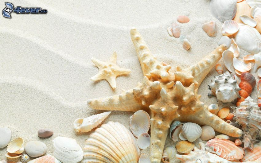 musslor, sand
