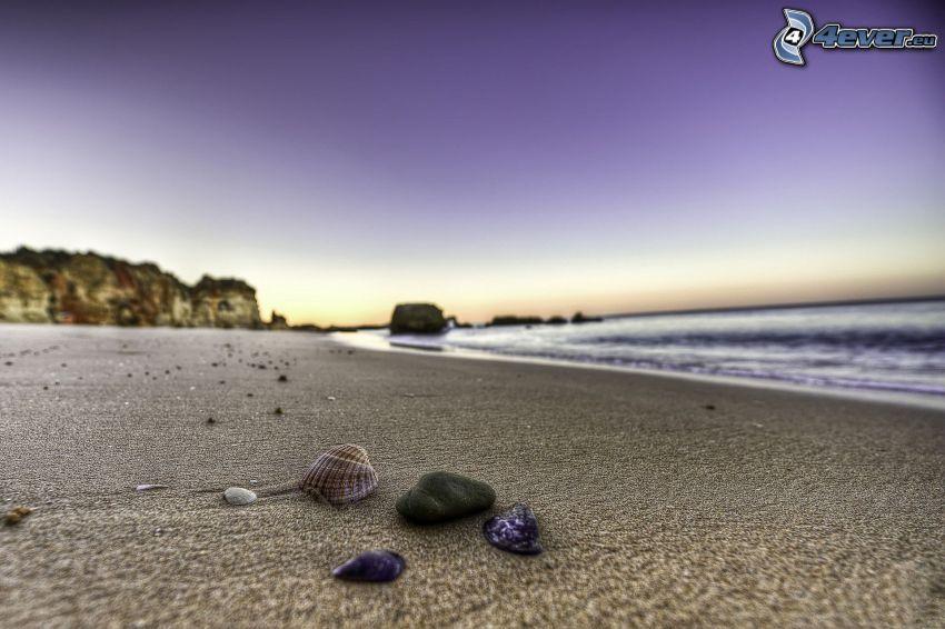 musslor, sandstrand, hav