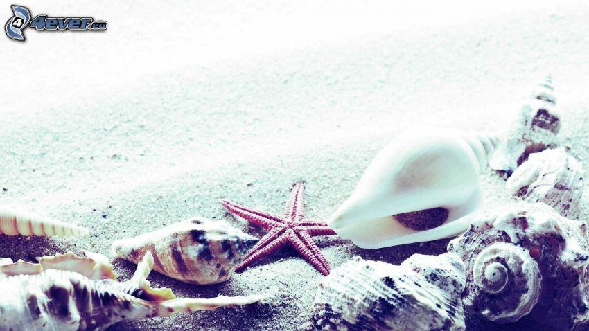 musslor, sandstrand