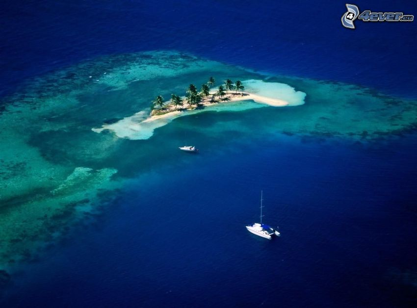 ö, palmer, båt, hav