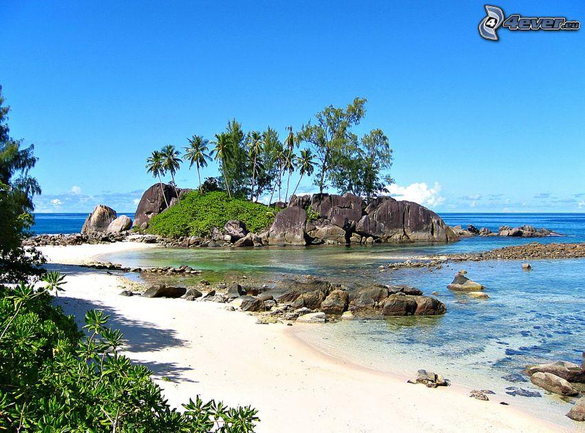 ö, stenig kust, hav, palmer