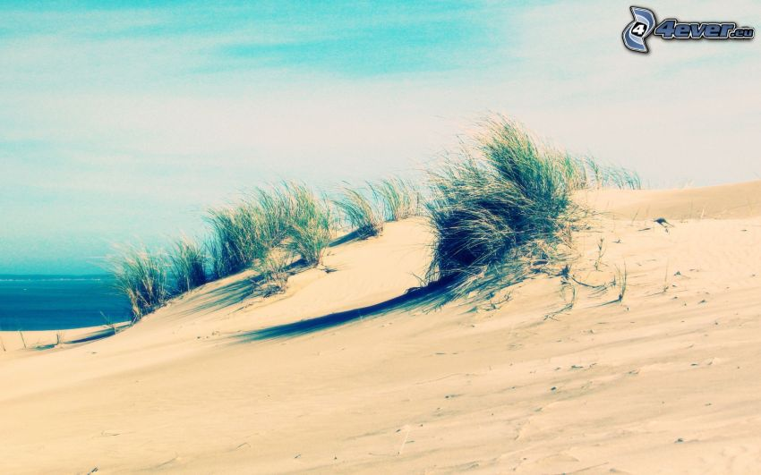 öken, gräs, hav