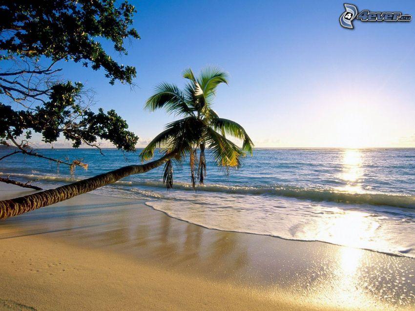öppet hav, palmer på strand, solnedgång över hav