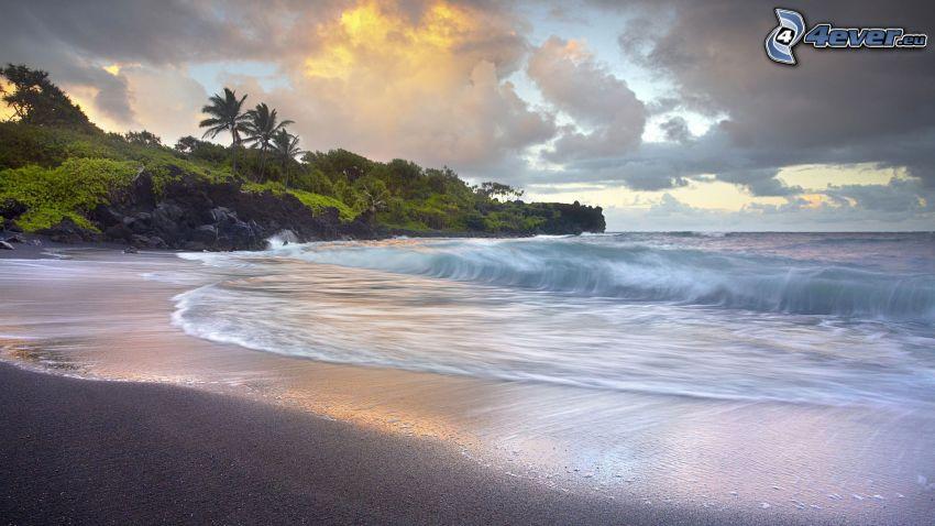 öppet hav, strand, grönska