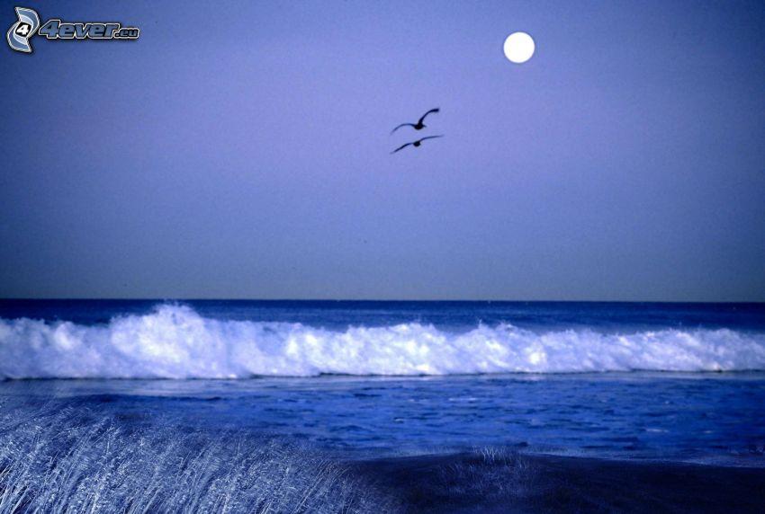 öppet hav, vattenfall, fåglar, måne