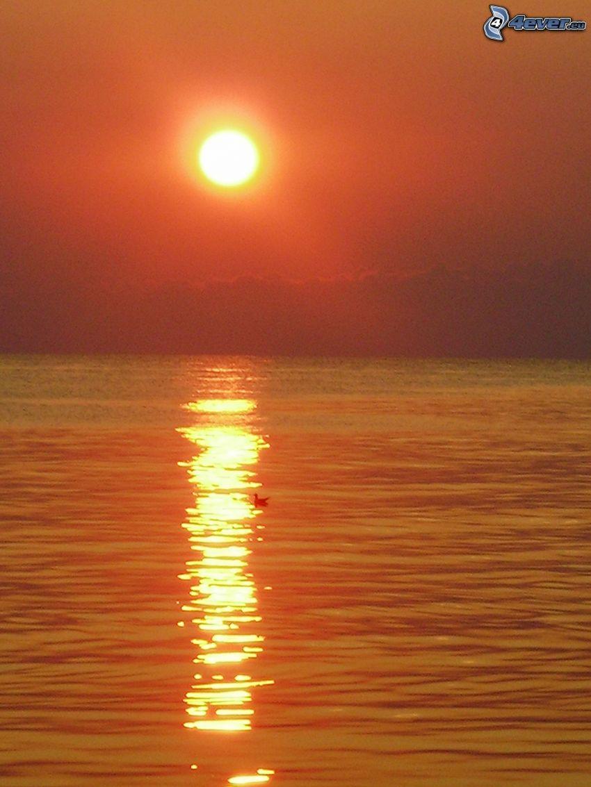 orange solnedgång över havet, fågel