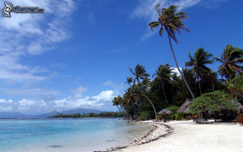 palmer, sandstrand, hav