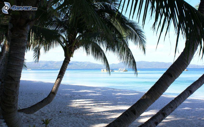 palmer på strand, azurblå sommarhav, kust