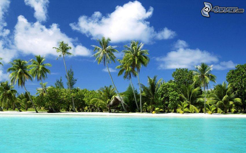 palmer på strand, grunt azurblå hav