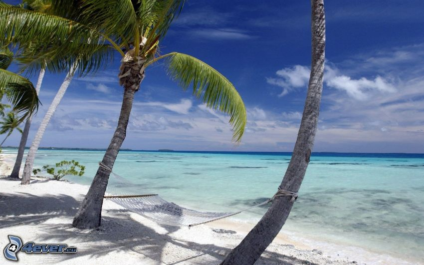 palmer på strand, hängmatta, azurblå hav