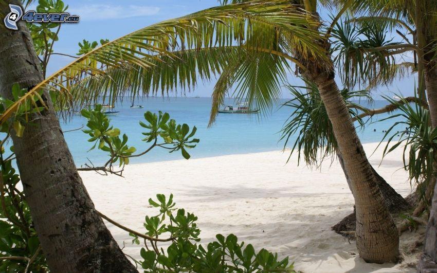 palmer på strand, hav, fartyg