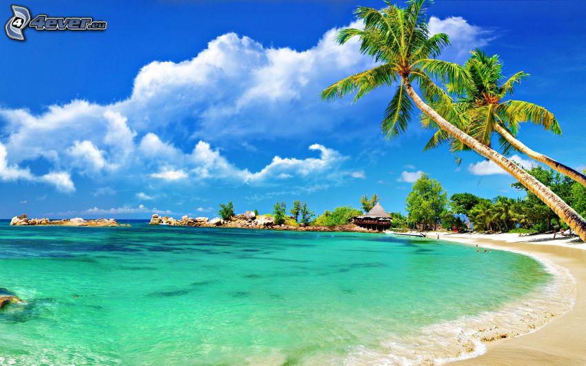 palmer på strand, hav, hus vid havet