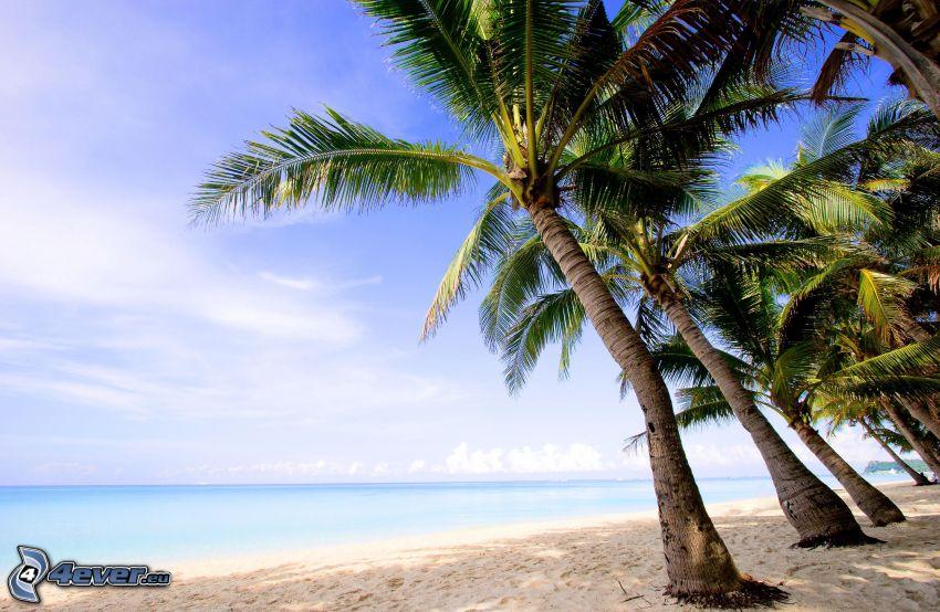palmer på strand, öppet hav