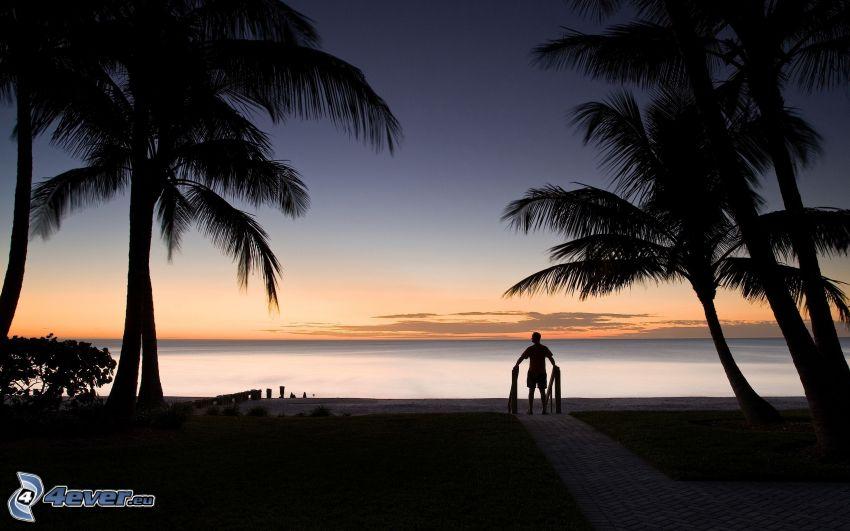 palmer vid solnedgången, silhuett av man, hav, trottoar